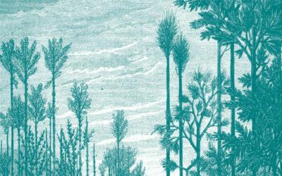 Prêles géantes dans le Jardin du Carbonifère d'ExploraParc à Saint-Étienne - Reconstitution de la flore houillère du bassin stéphanien.